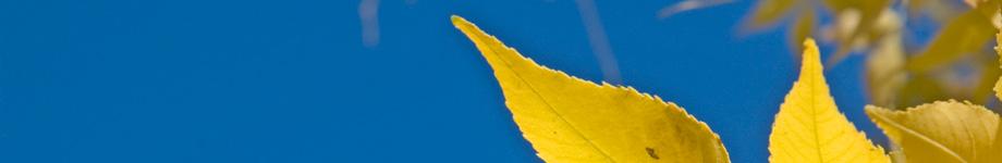 Adams State Blogs Rotating Header Image